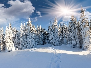 Covered, viewes, rays of the Sun, snow, trees