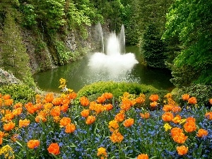 Tulips, Forget, waterfall