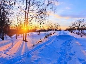 viewes, sun, trees, winter, Way, east