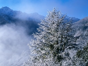 viewes, trees, Mountains, winter, Fog