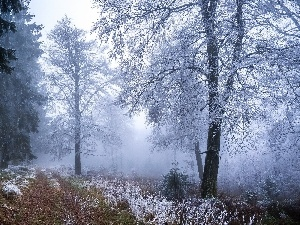 viewes, Snowy, trees, forest, winter, Way