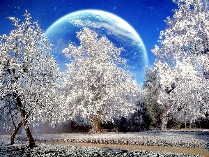 viewes, trees, winter, Planet