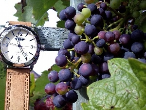 Watch, Grapes, Wooden, hand-rail