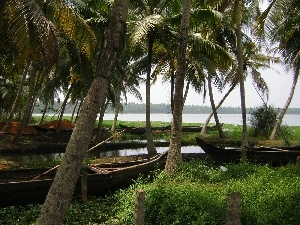 water, grass, boats, Palms
