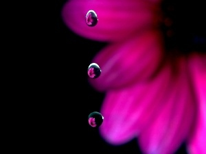 water, drops, Colourfull Flowers, Gerber
