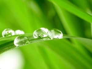 water, drops, grass, ##