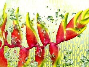 water, Heliconia