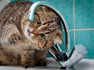 water, tap, kitten, play, Bathroom