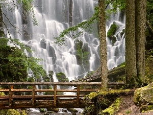 bridges, waterfall, forest