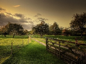Way, viewes, fruit, orchard, fence, trees