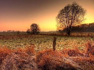 autumn, west, White frost, field, sun, medows, woods