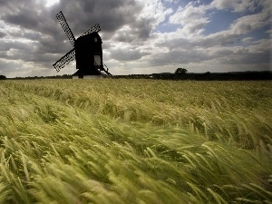 cereals, Windmill, Ears
