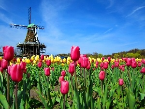 Tulips, Windmill, Sky