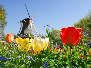 Windmill, Tulips