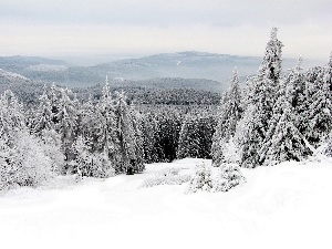 forest, winter, Mountains
