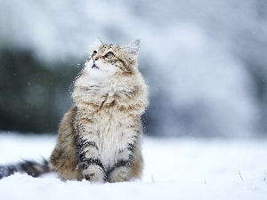 winter, snow, kitten, surprise