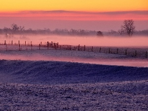 winter, viewes, Fog, field, morning, trees