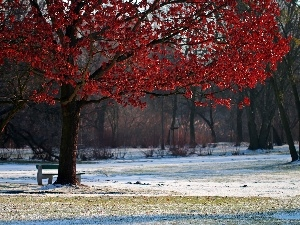 winter, Leaf, trees, Park, Red