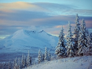 winter, Spruces, Sky, Mountains
