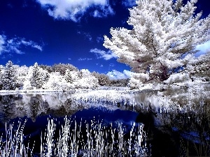 winter, lake, trees, viewes