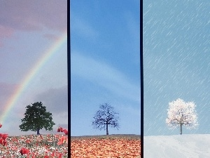 Seasons, year, four