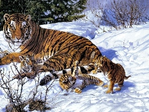 young, Three, winter, tiger
