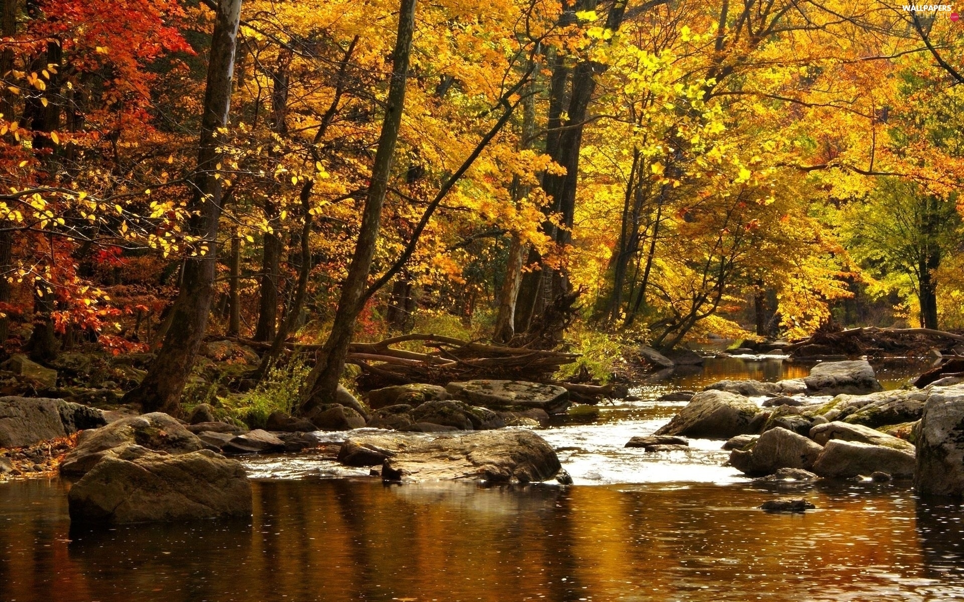 forest, autumn, River