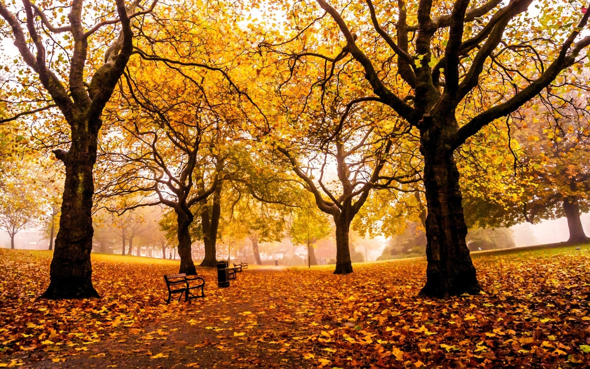 bench, viewes, Leaf, Park, autumn, trees