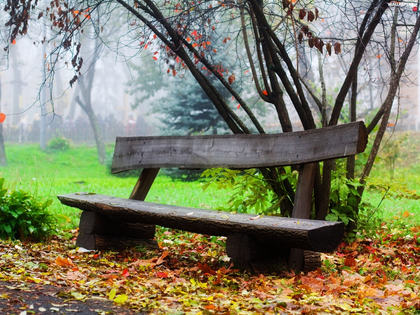 Bench, Park, hazy, Autumn
