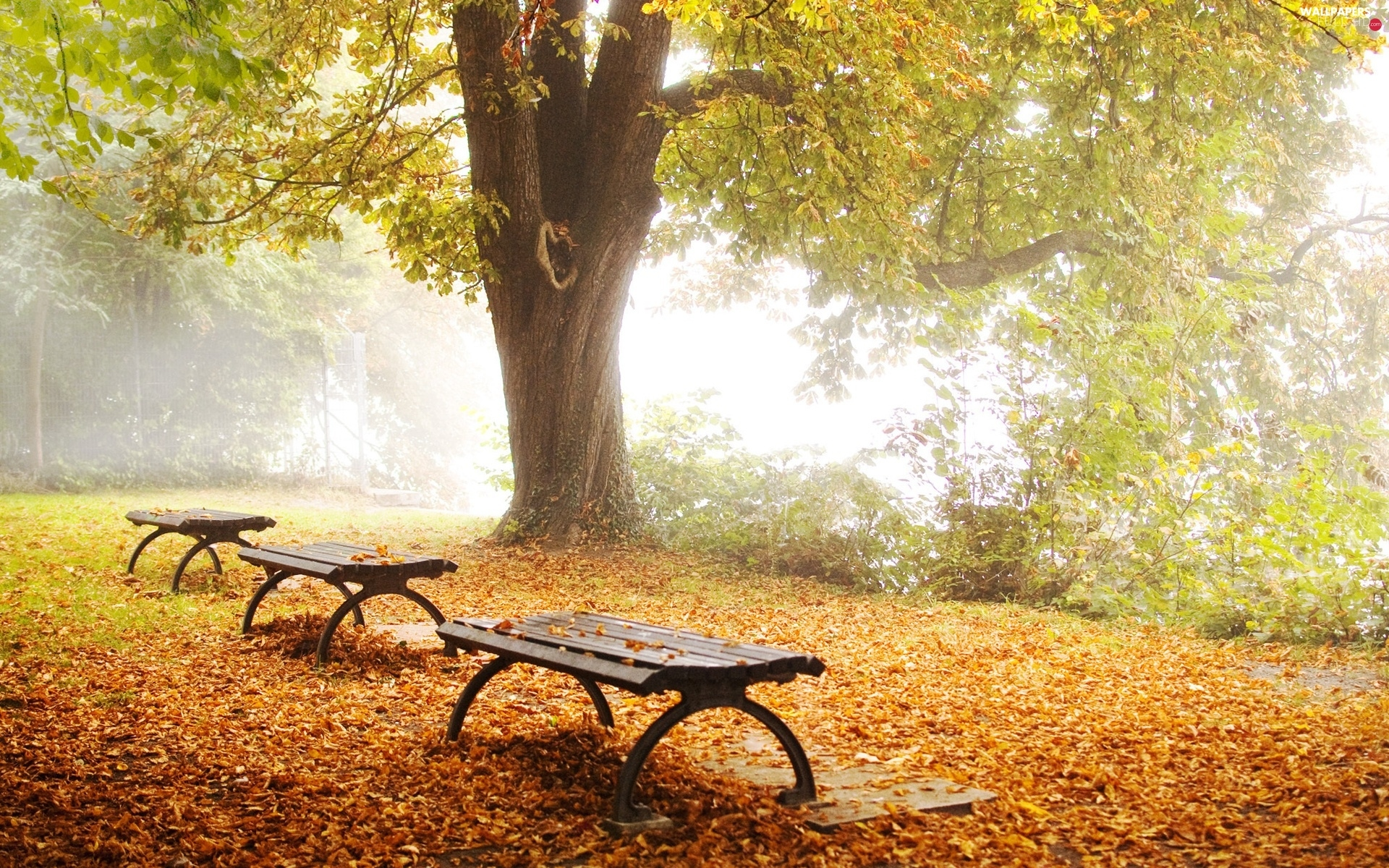 Leaf, bench, forest, autumn, car in the meadow