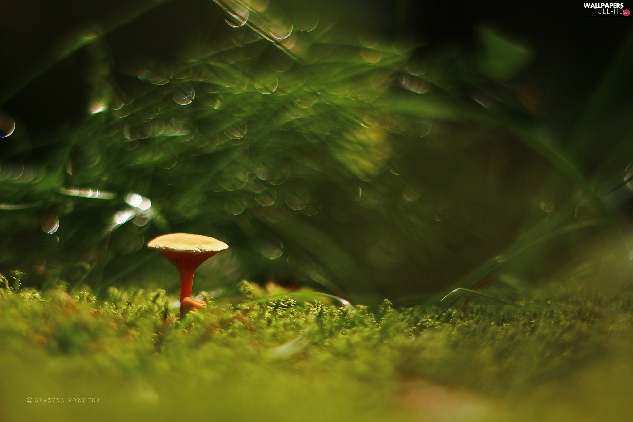Moss, Bokeh, Mushrooms