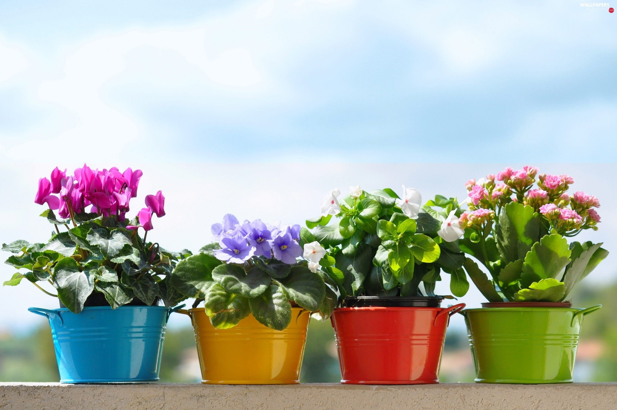 Buckets, color, Flowers, potted
