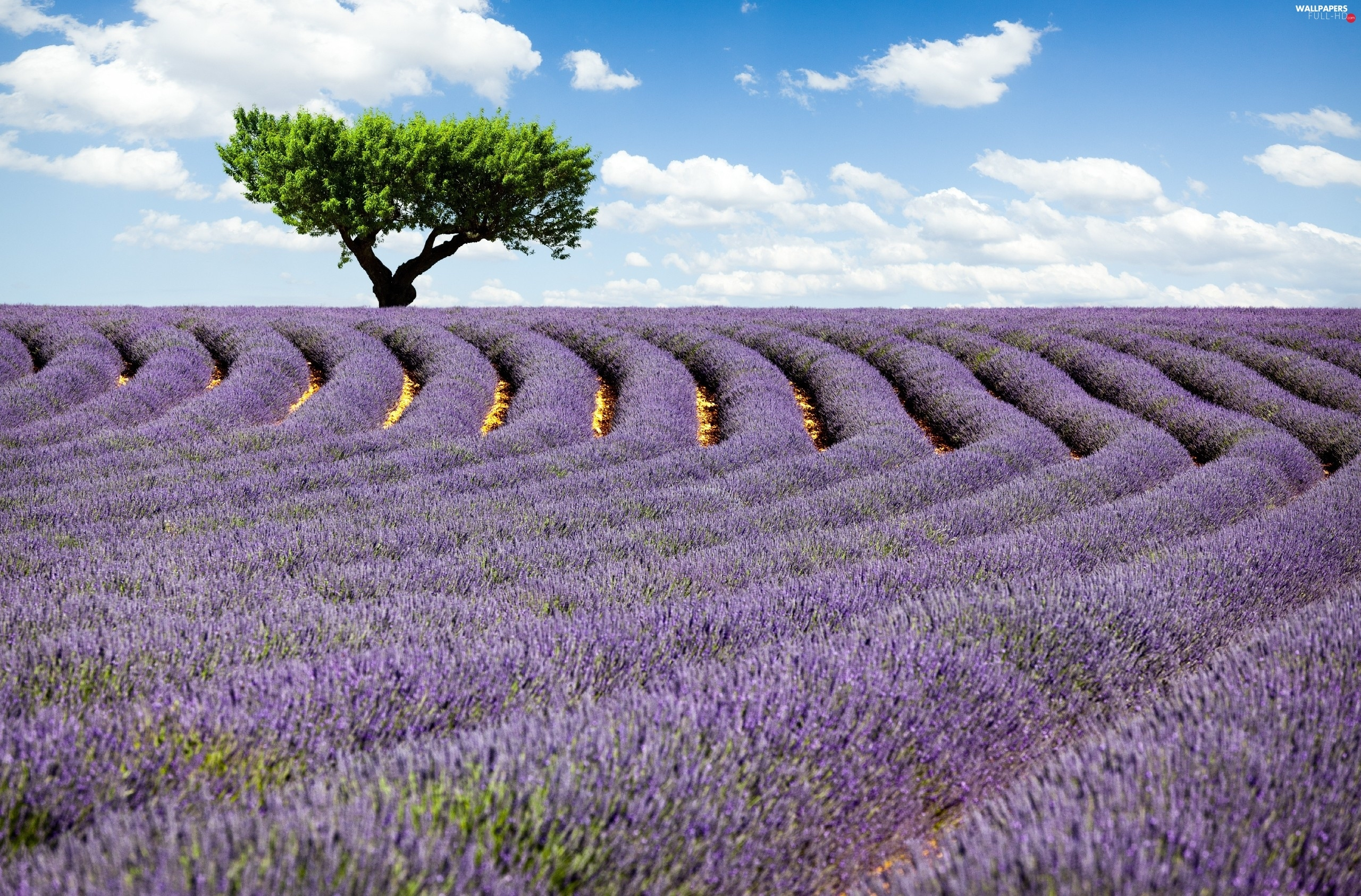 clouds, trees, Field, lavender