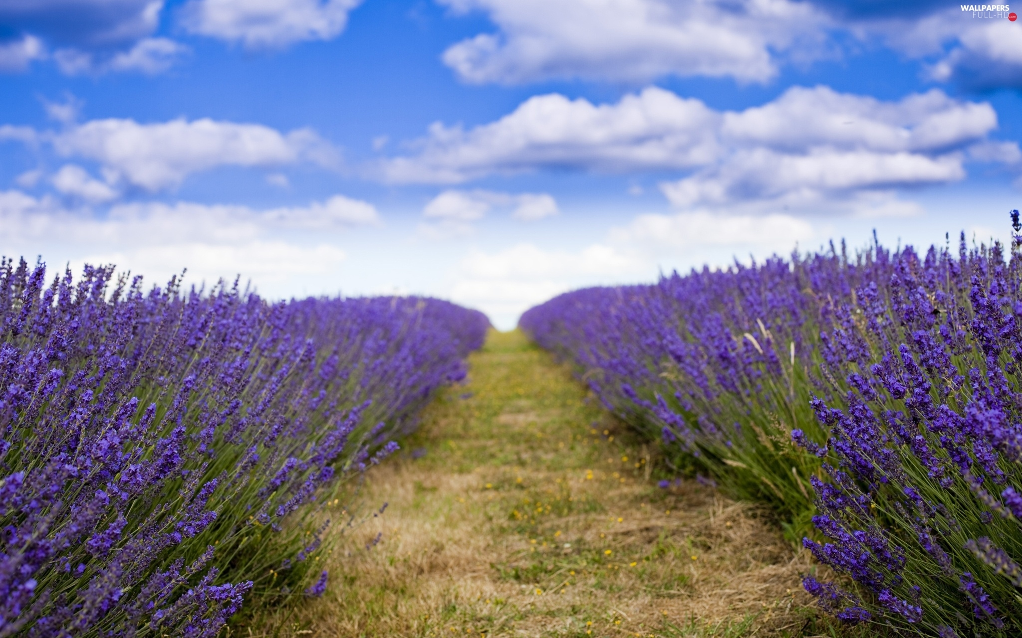 clouds, Sky, lavender, Field