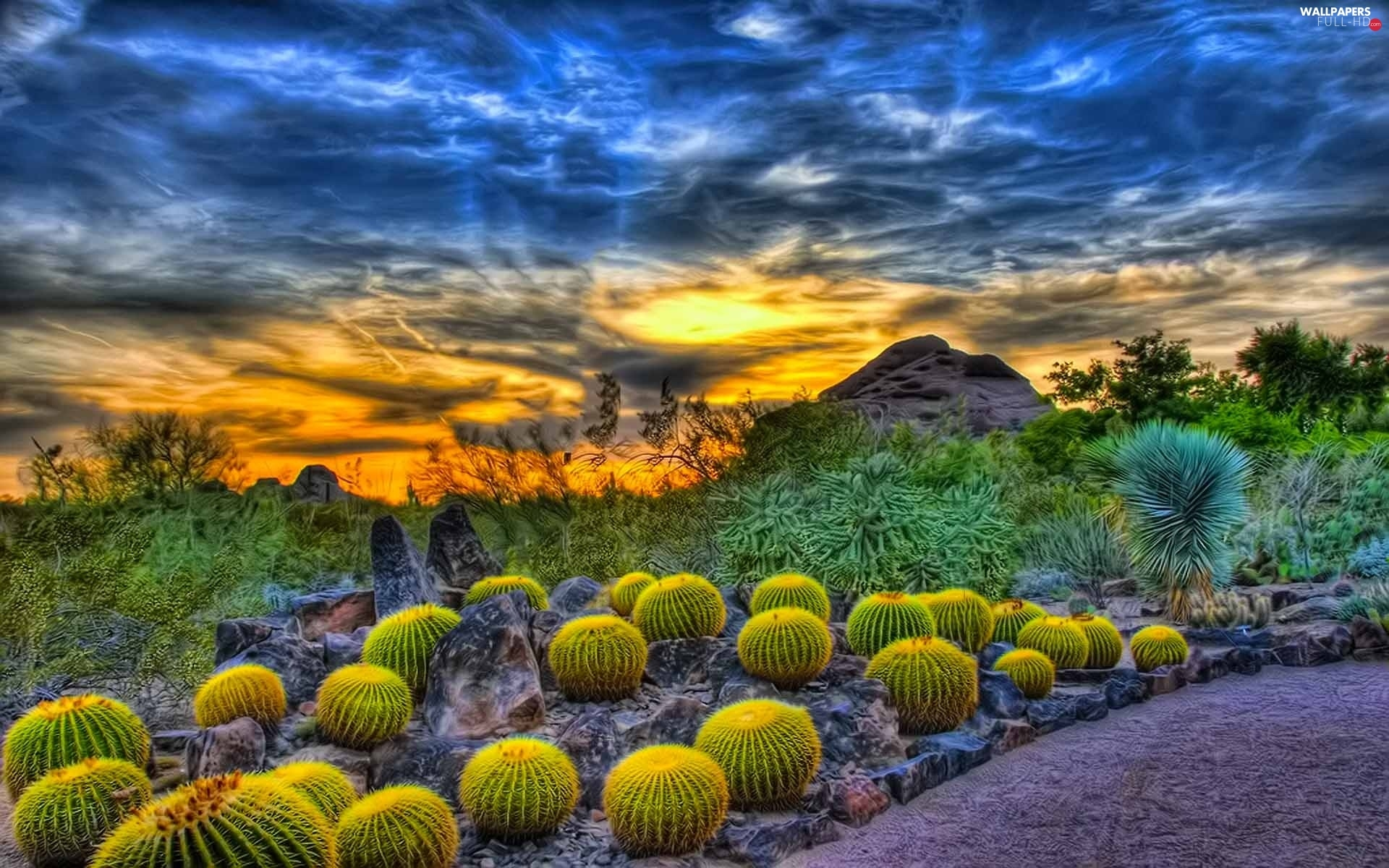 clouds, Great Sunsets, Cactus