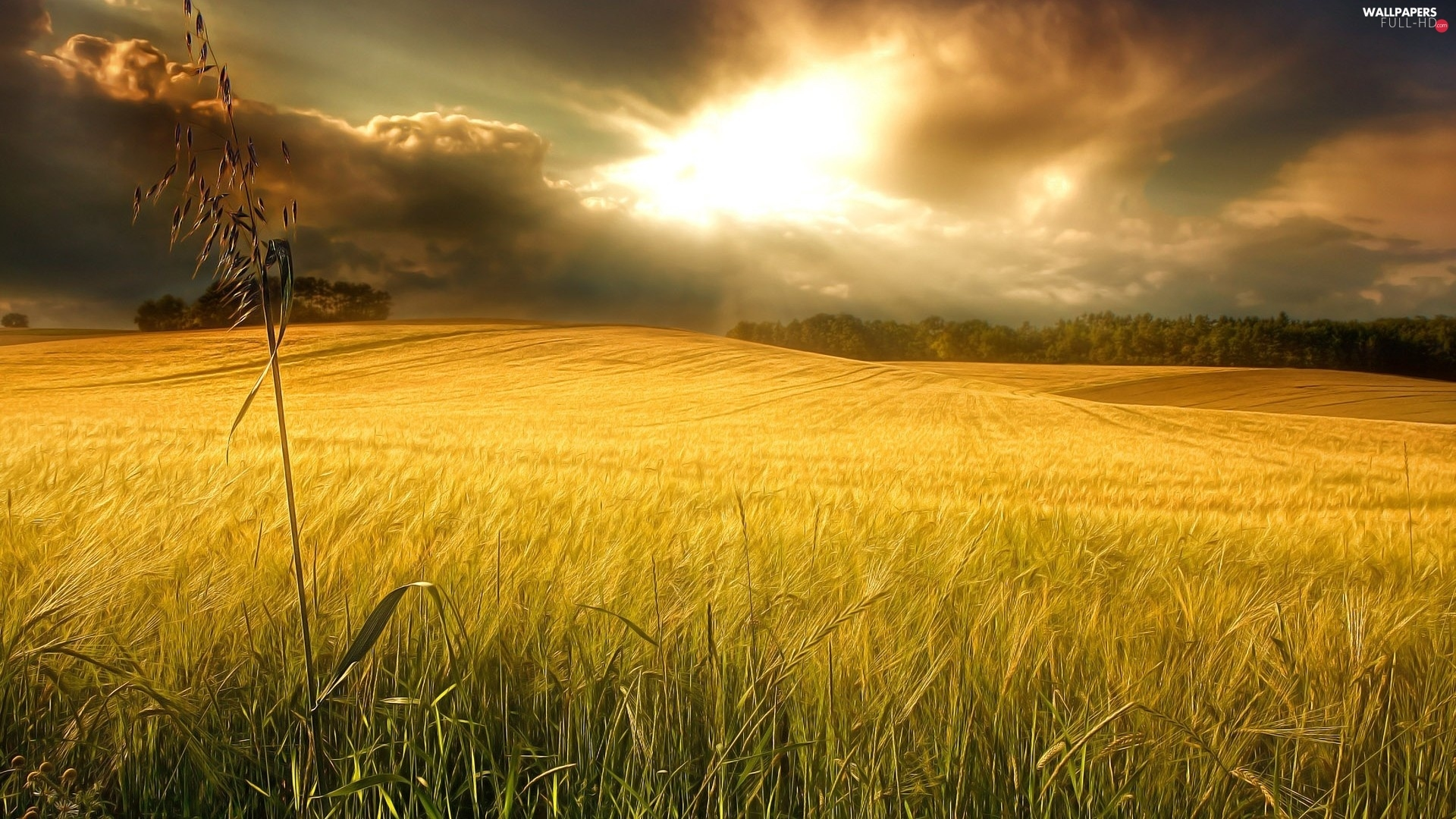 wheat, clouds, Field
