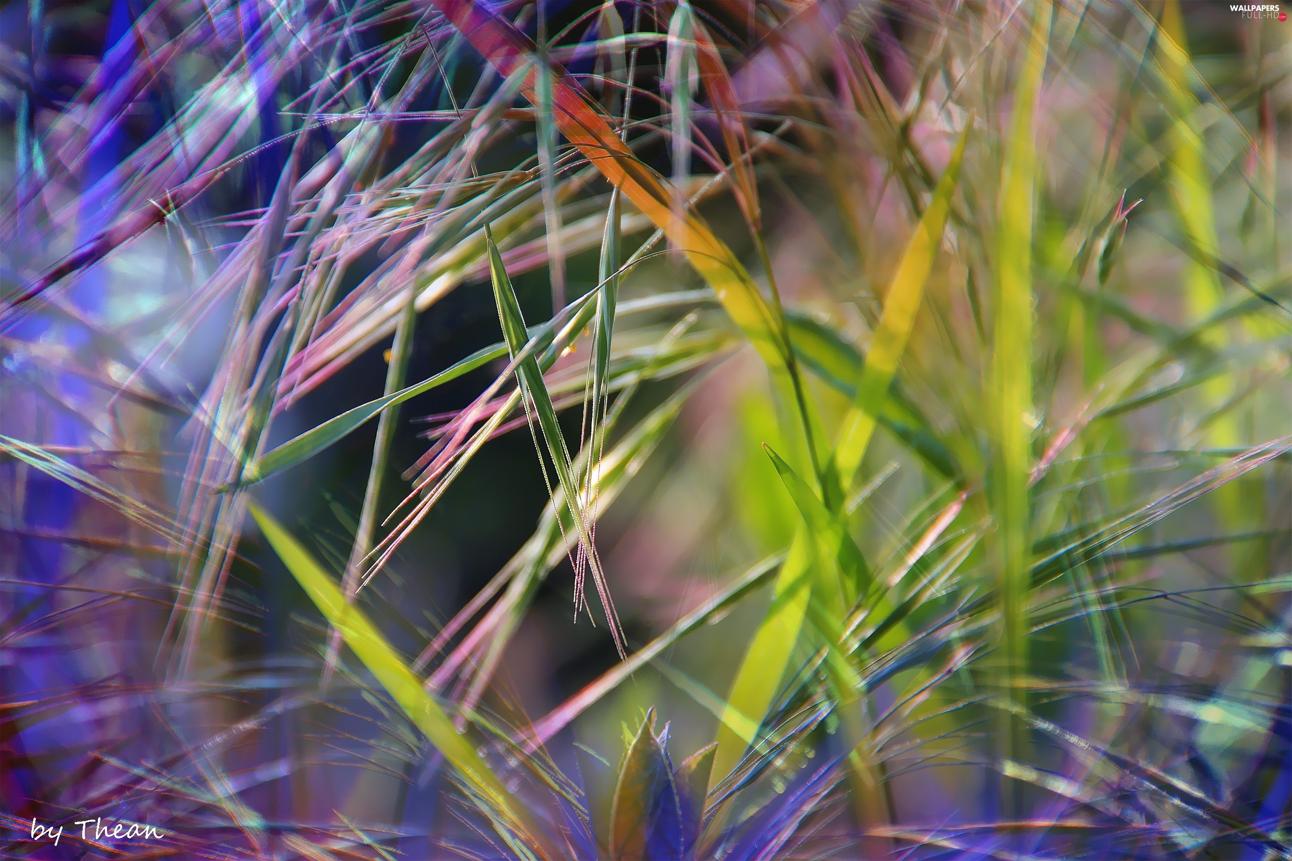 grass, colors, inflorescence