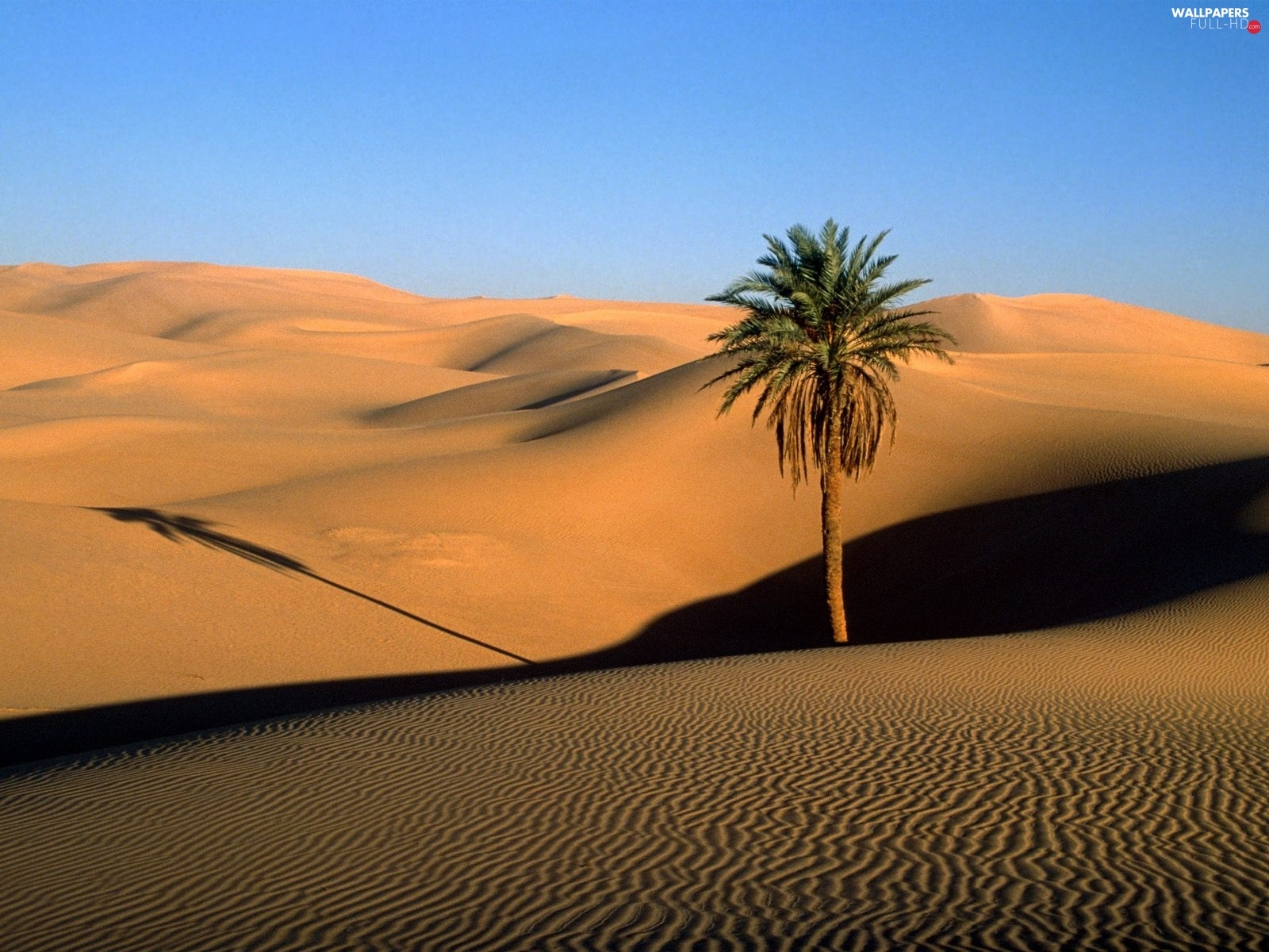 Palm, Desert, Lonely