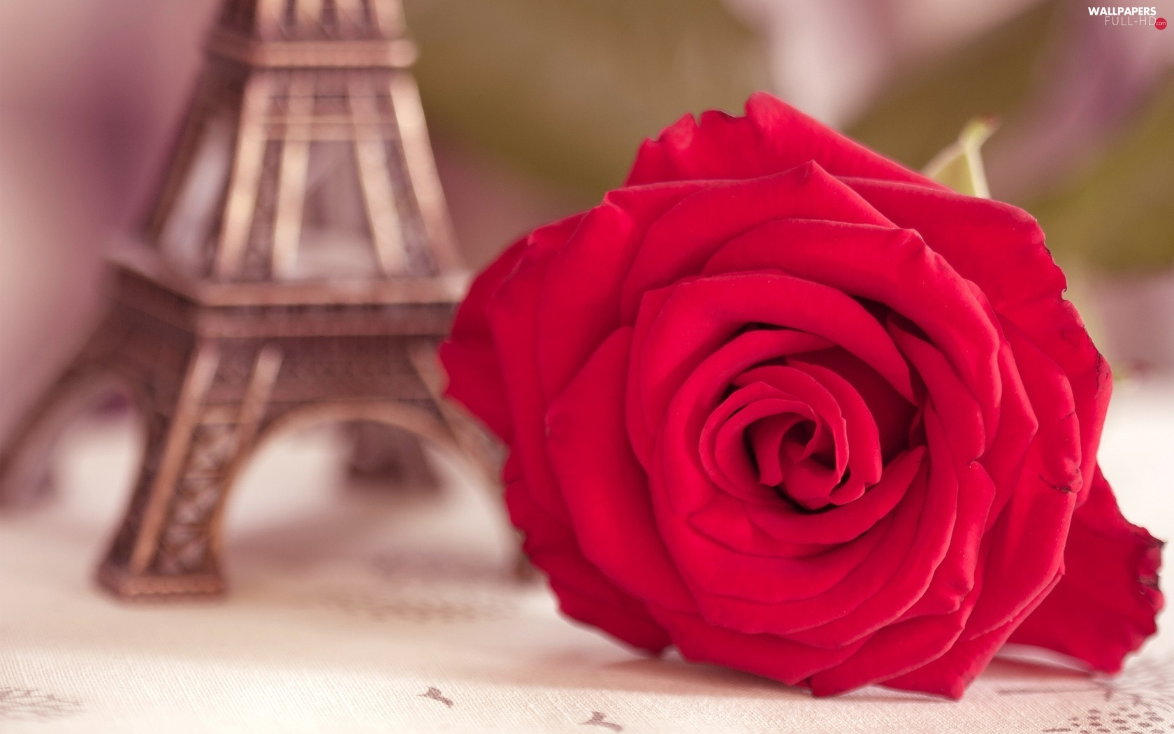 Eiffla, tower, red hot, rose