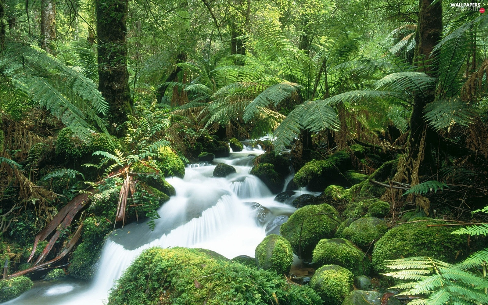 Fern, Stones, River, mossy
