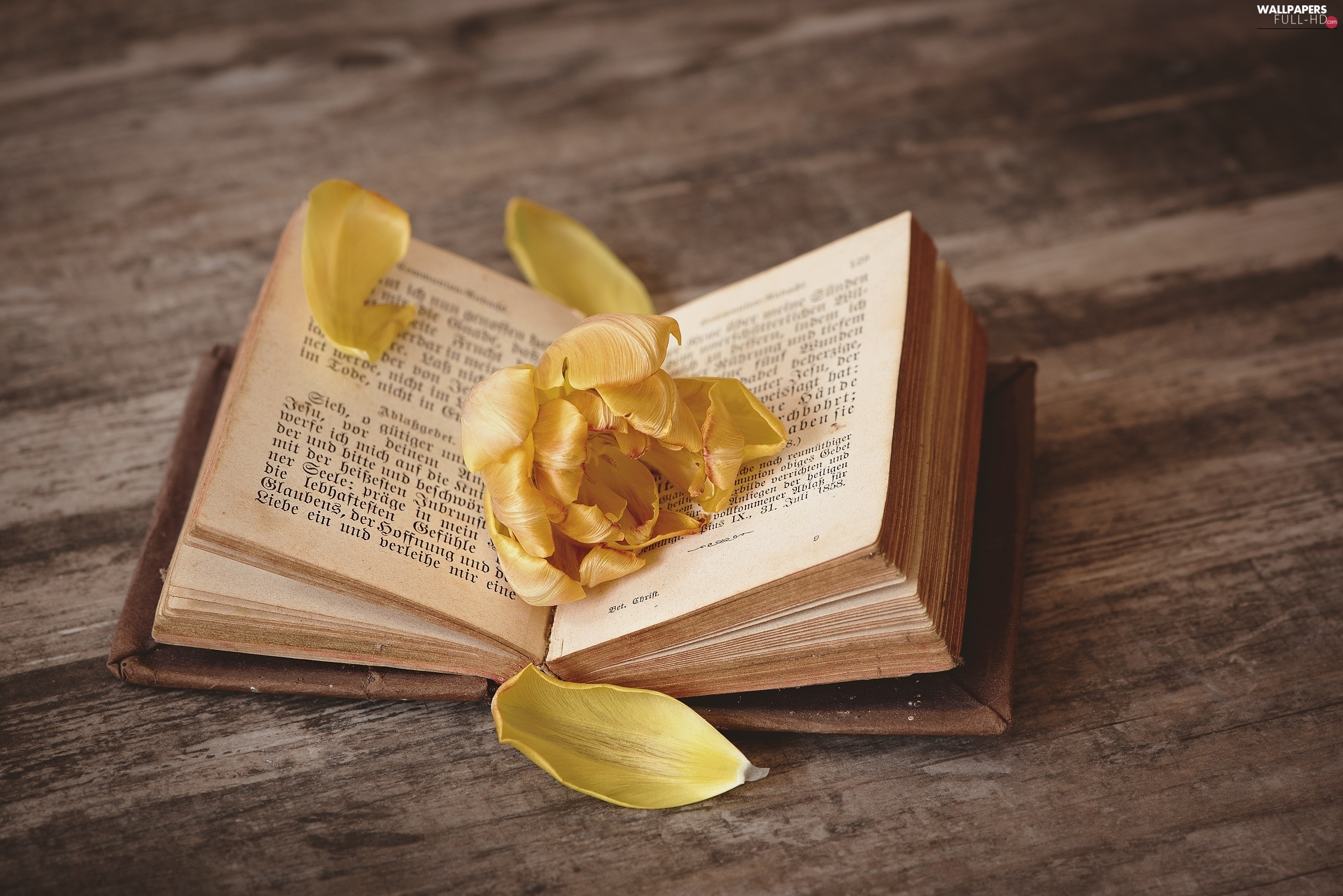 flakes, Colourfull Flowers, Book, Yellow
