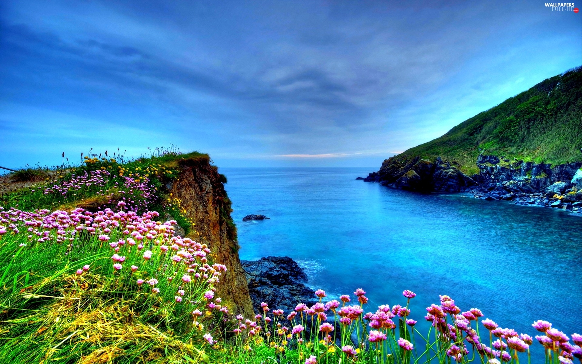 Coast, Flowers, sea