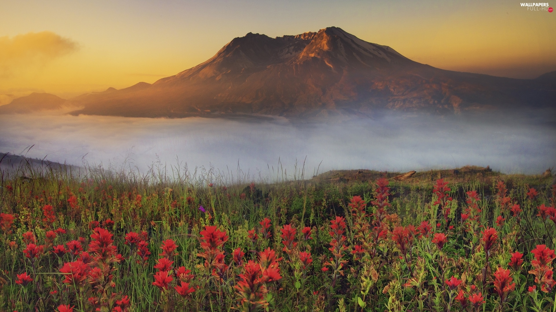 Fog, Flowers, mountains