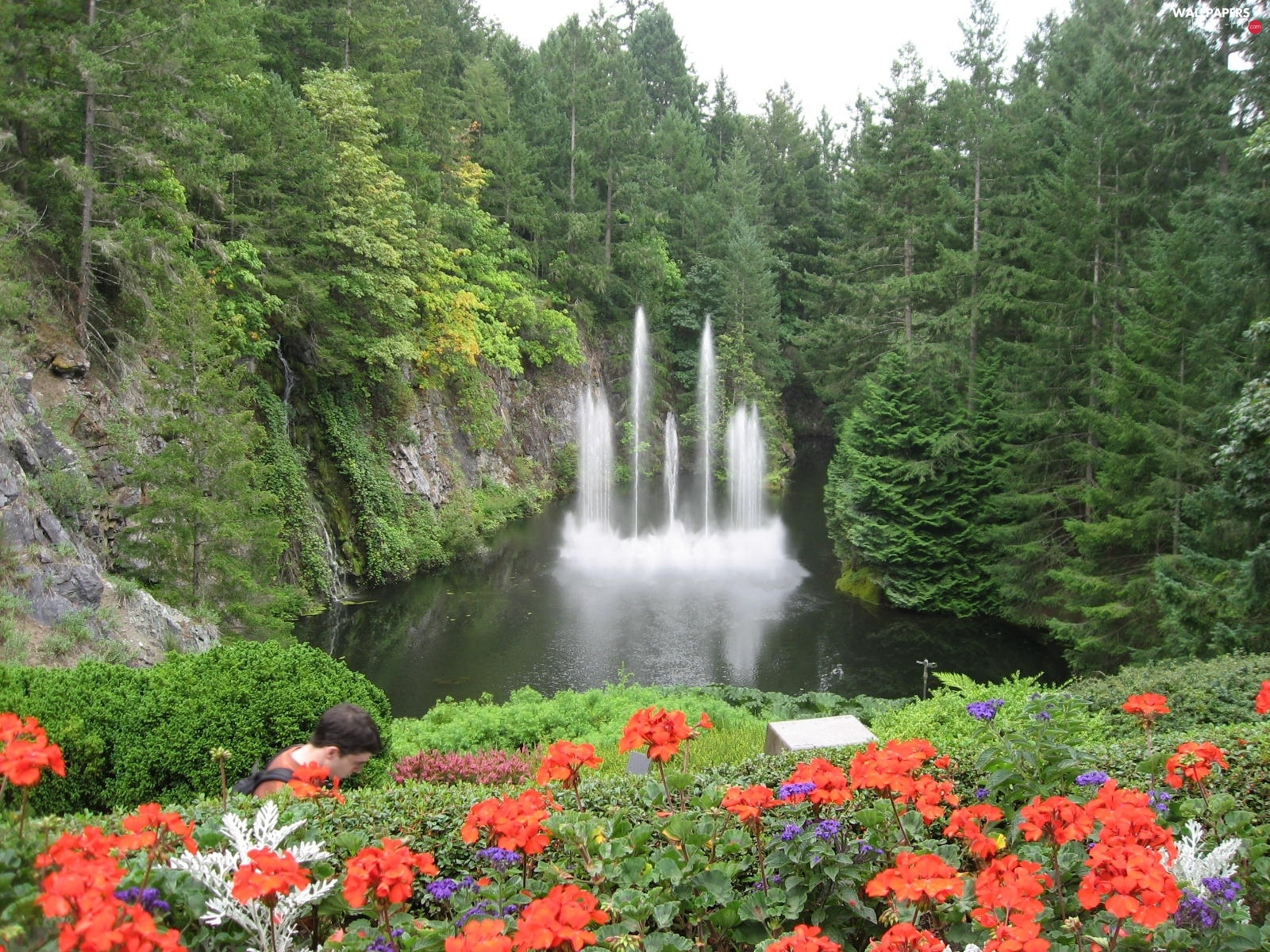 Flowers, forest, fountain, lake