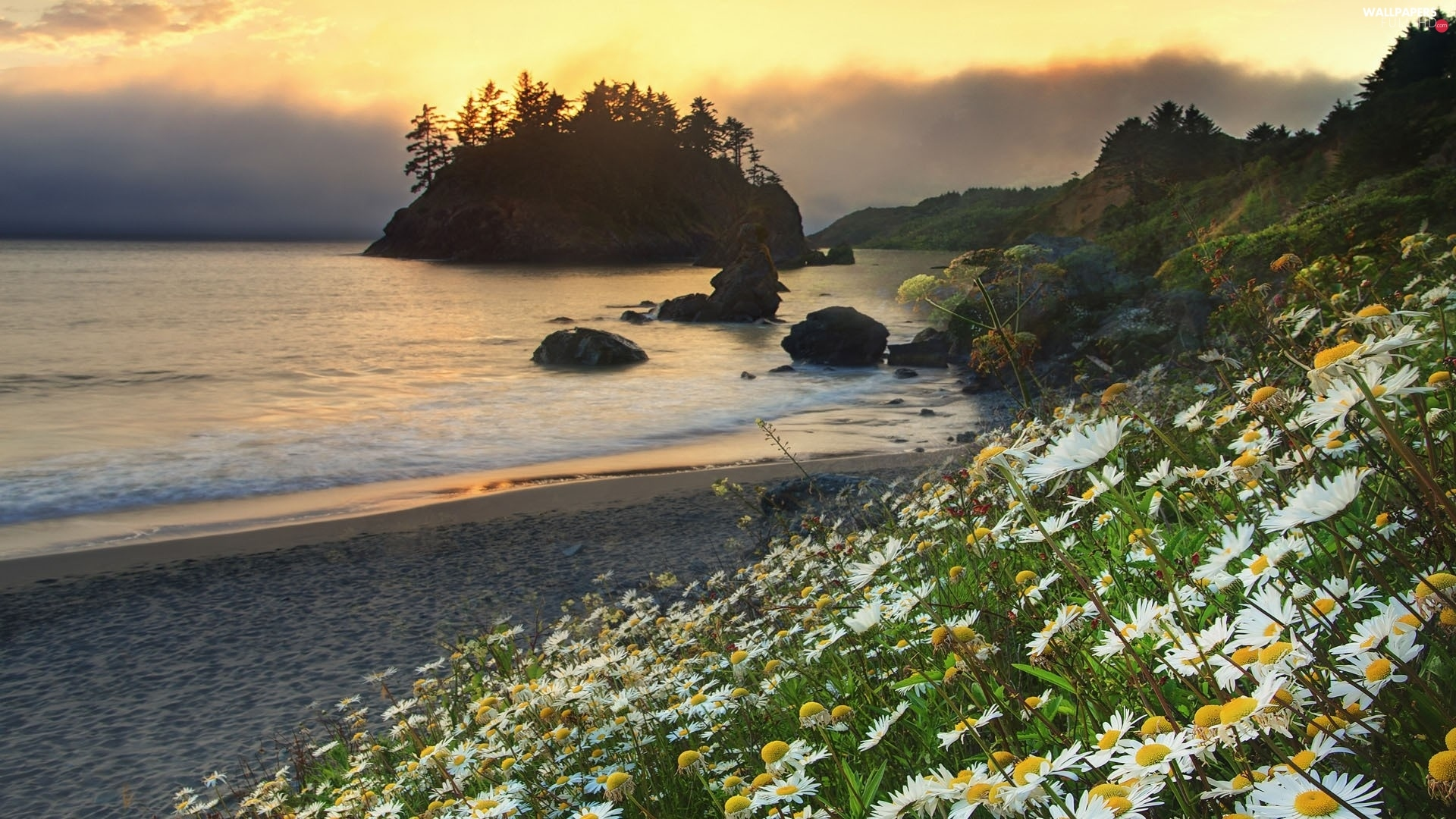 Flowers, Beaches, Island, Coast