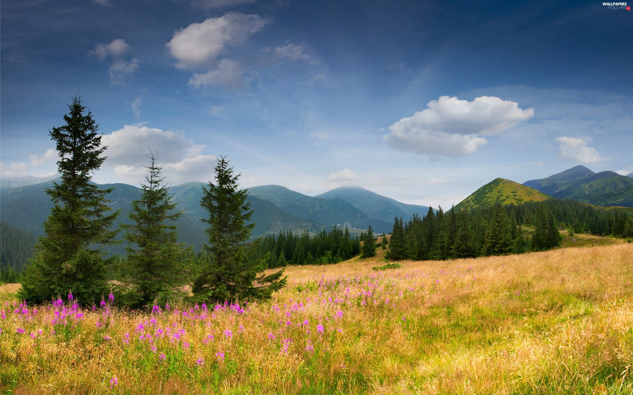 Flowers, medows, Mountains, woods