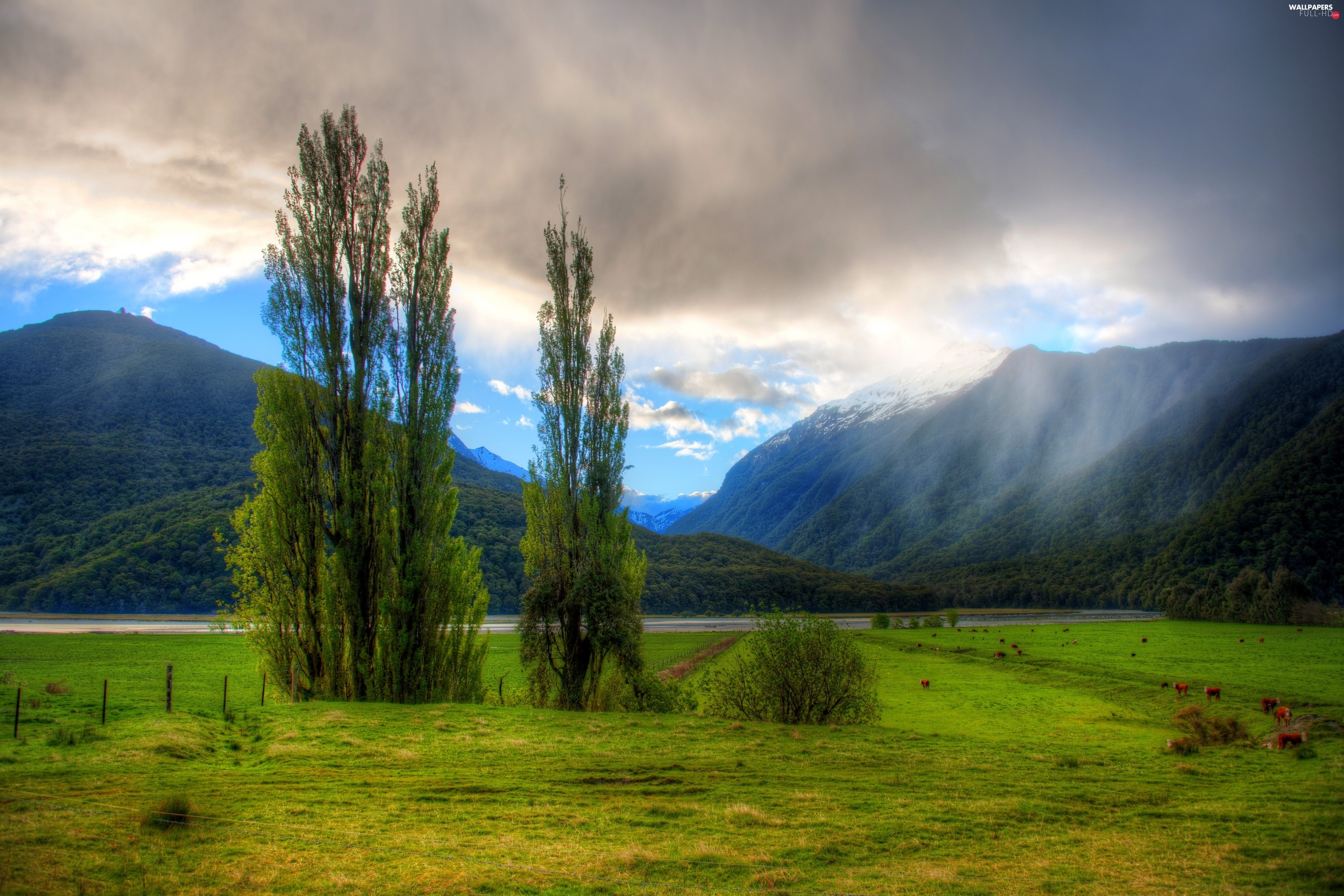 Fog, River, Mountains, clouds, woods