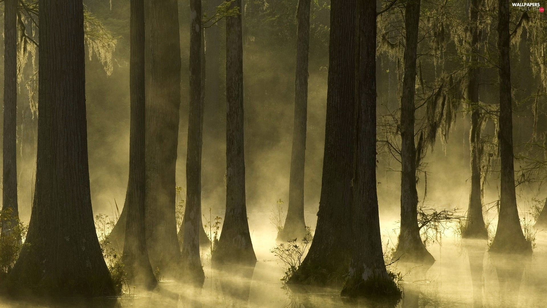 Fog, viewes, forest, trees