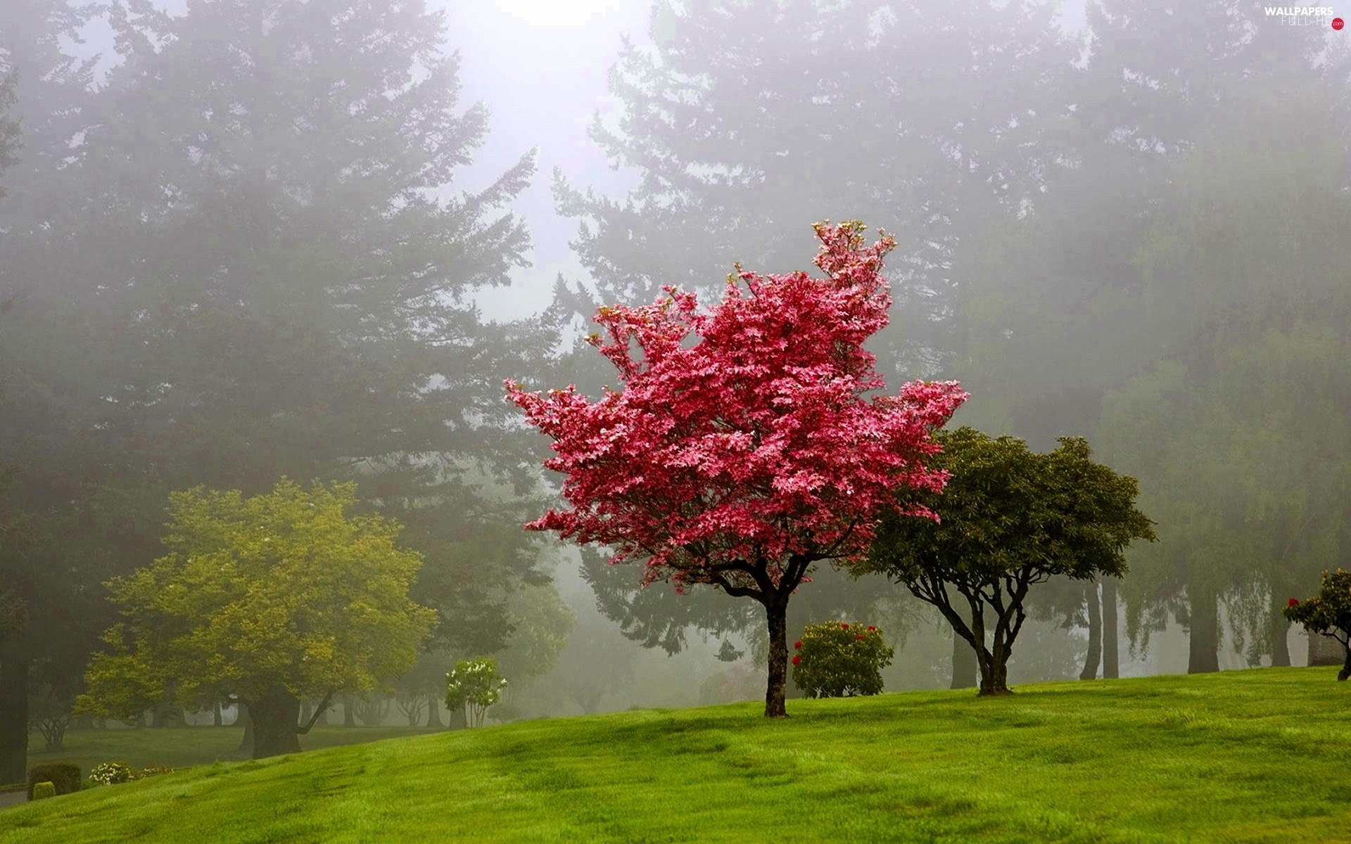 Fog, viewes, Park, trees
