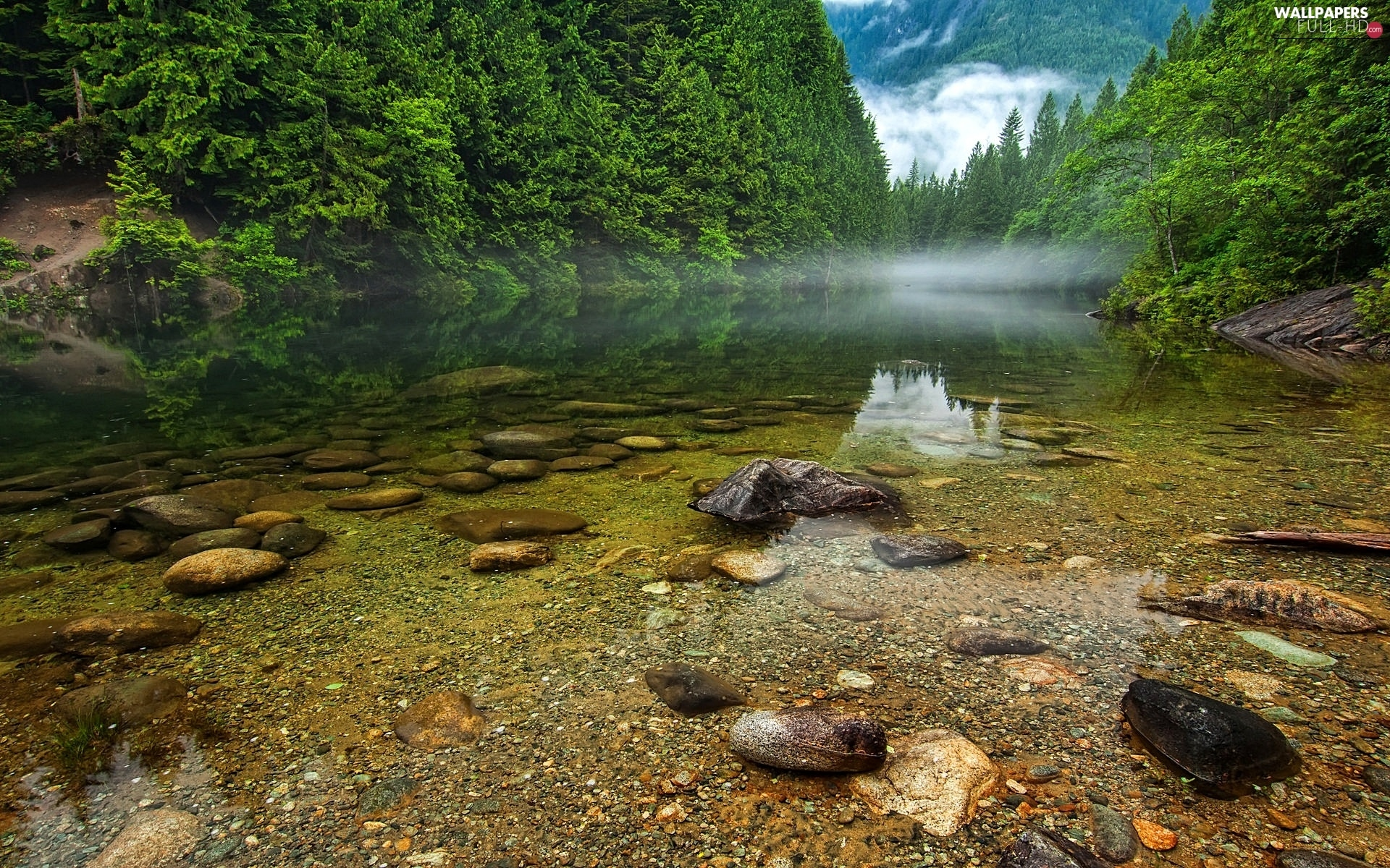 forest, Fog, lake, Canada, Stones